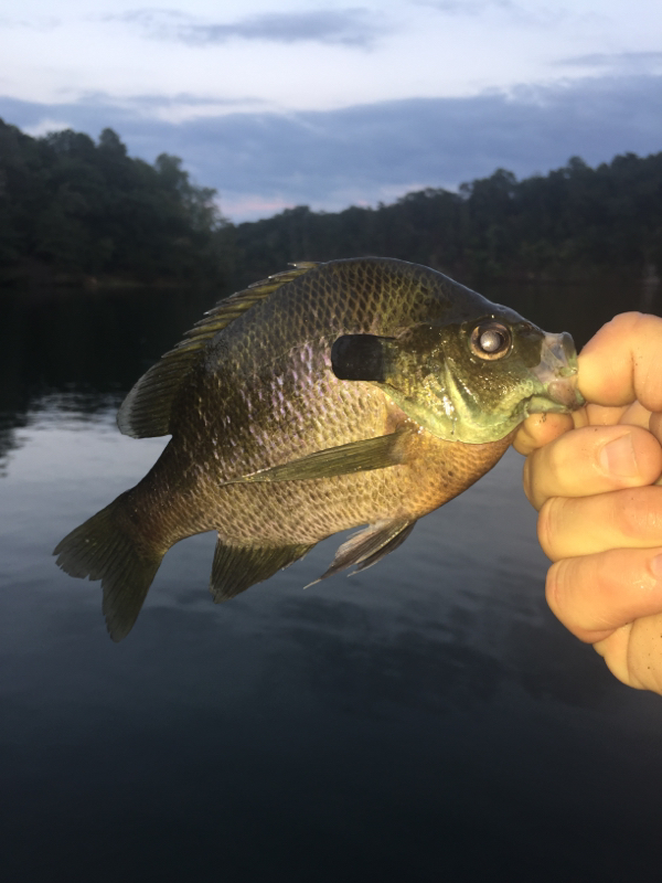 Lake tuscaloosa al fishing reports map hot spots for Mobile alabama fishing report