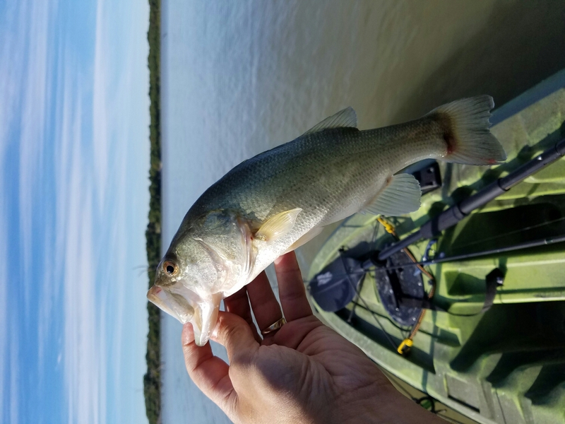 Lavon lake tx fishing reports map hot spots for Lake fork fishing hot spots